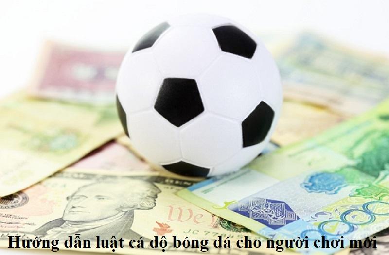 huong-dan-luat-ca-do-bong-da-cho-nguoi-choi-moi